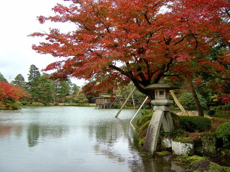 兼六園:徽軫灯籠(ことじとうろう)の美しい紅葉の景色