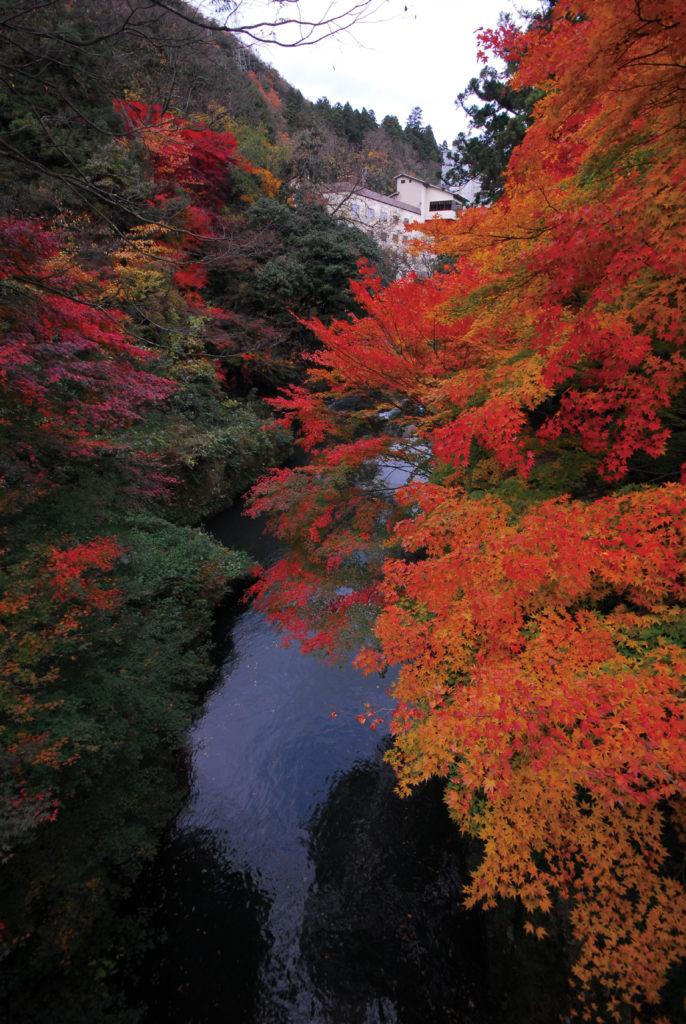 山中温泉鶴仙渓(かくせんけい)の美しい紅葉の景色