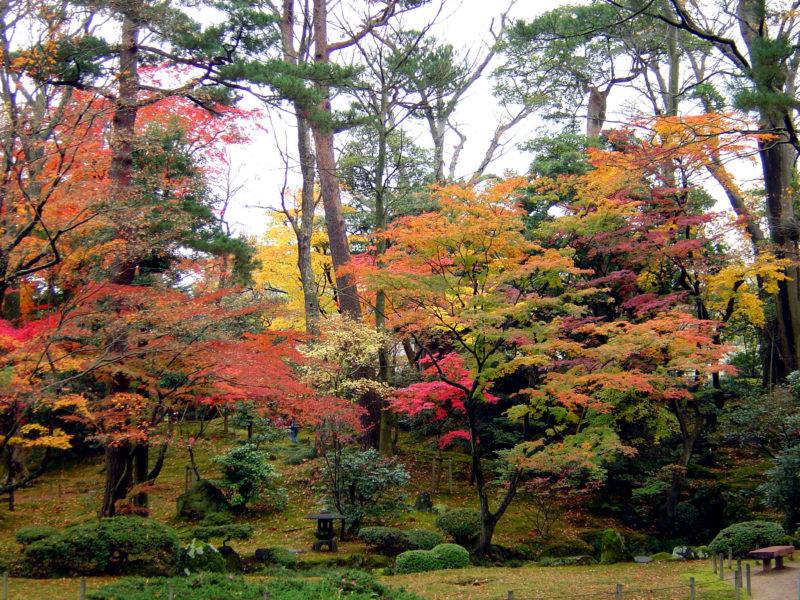 兼六園:山崎山の素晴らしい紅葉の景色