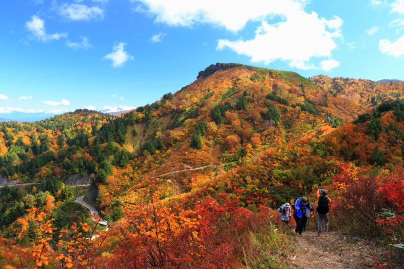白山白川郷ホワイトロードの紅葉スポットであるふくべ谷上園地展望台からの景色