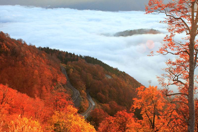 白山白川郷ホワイトロードの紅葉と雲海