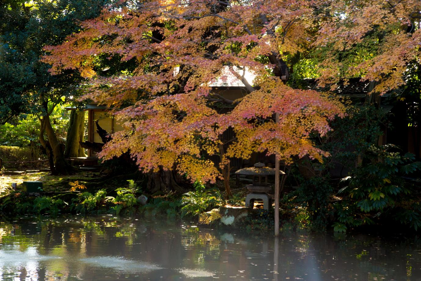 「松風閣庭園(しょうふうかくていえん)」の紅葉