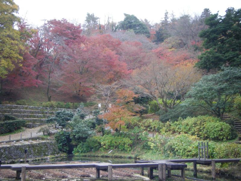 卯辰山「花菖蒲園」の紅葉