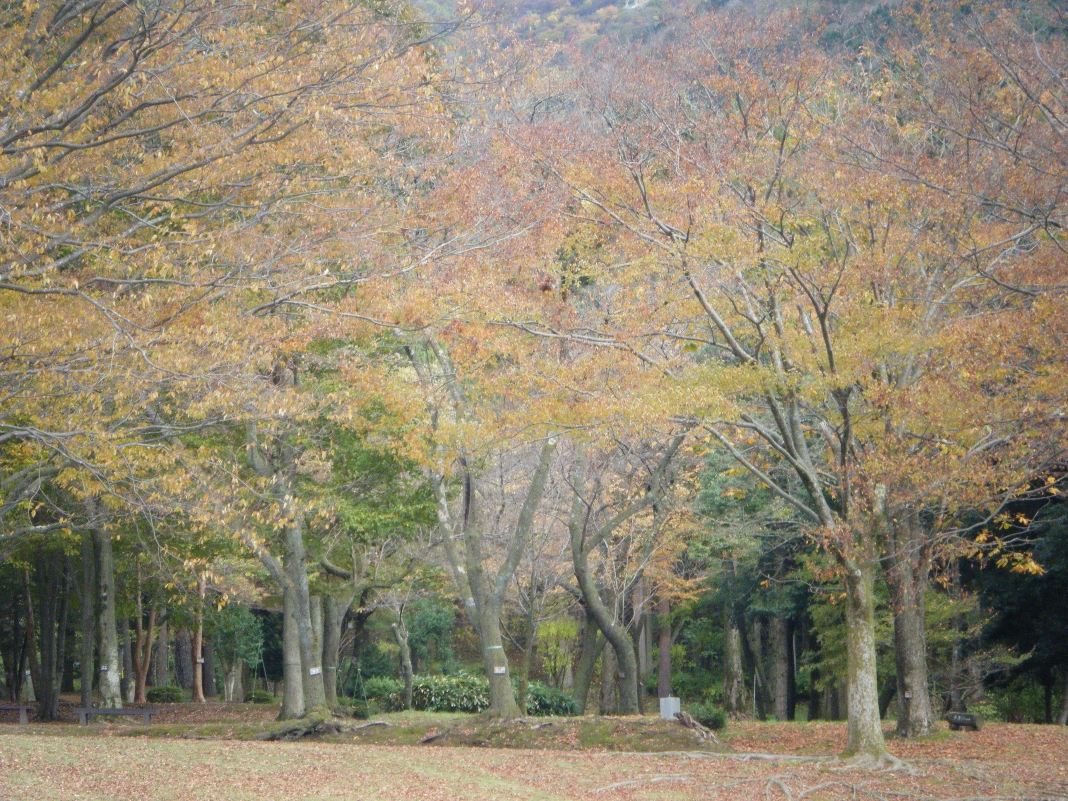 【樹木公園(じゅもくこうえん)】石川県の紅葉情報