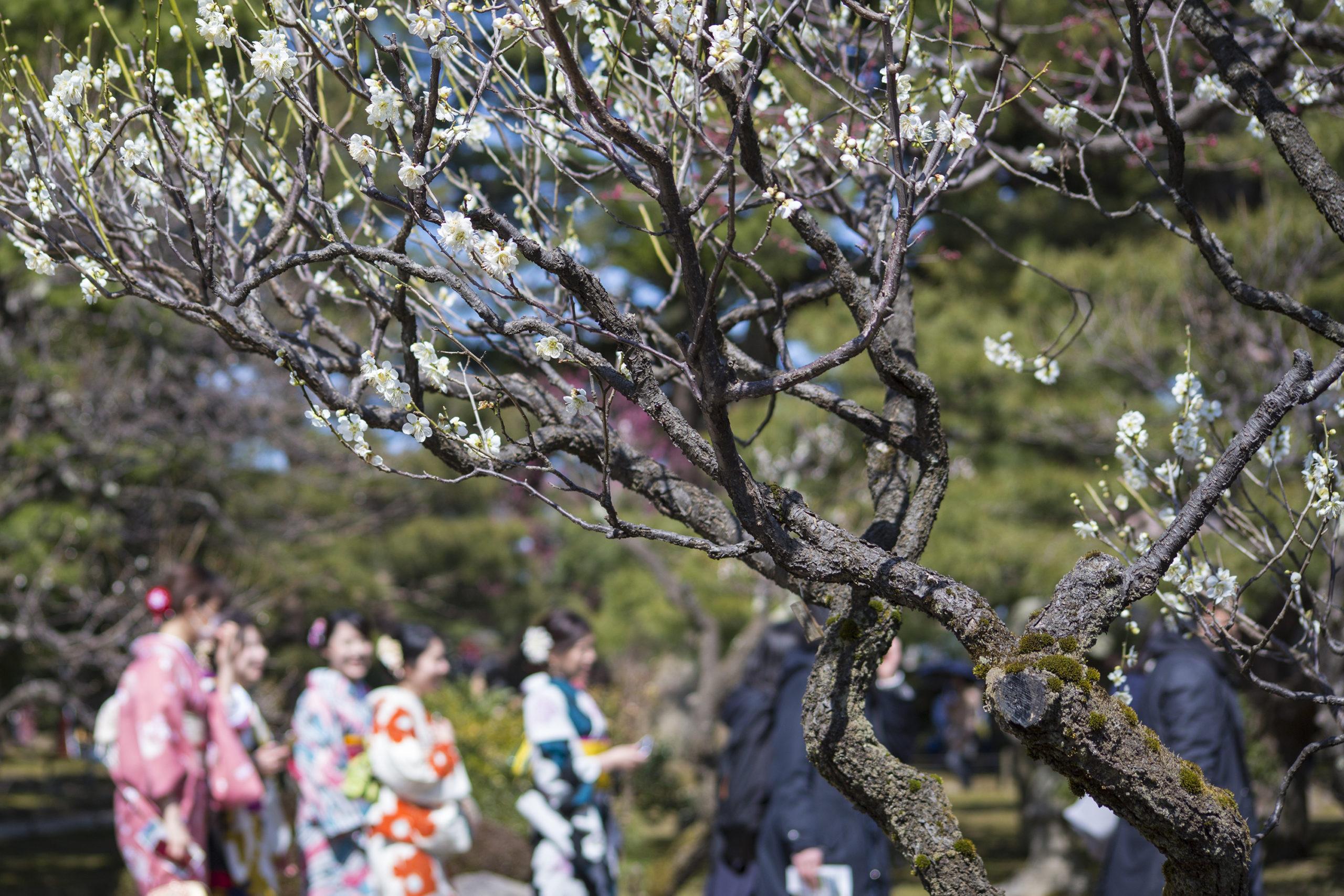 【兼六園と金沢城址公園/お花見ルート】おすすめ!石川県の桜名所・お花見スポット情報