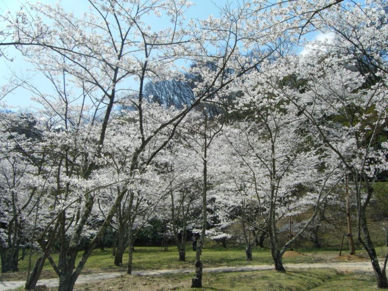 【石川県のお花見情報】卯辰山に整備された四百年の森が美麗
