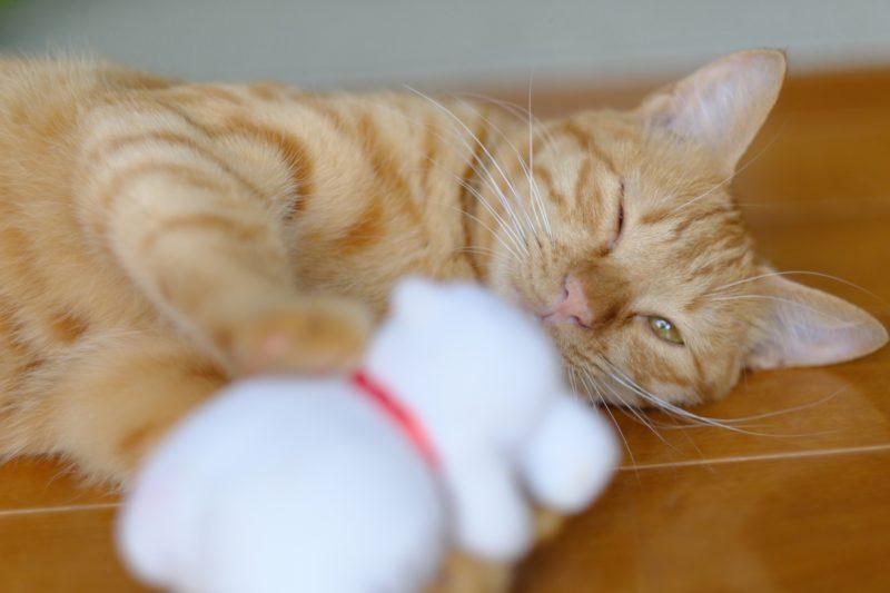 【ネコちゃんと意思疎通】猫がウインクするのは何故?
