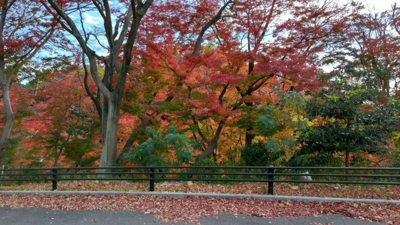 卯辰山の美しい紅葉